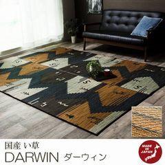 い草 ラグ『DARWIN/ダーウィン』の商品画像
