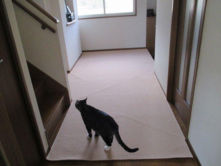 うめちゃんさんからのカーペット  FRIPE/フライプレビュー